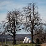 Még a Magyar Idők szerint sem kapkodták szét az állami földeket