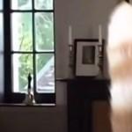 Elnézést a macskám farkáért – mondta a képviselő