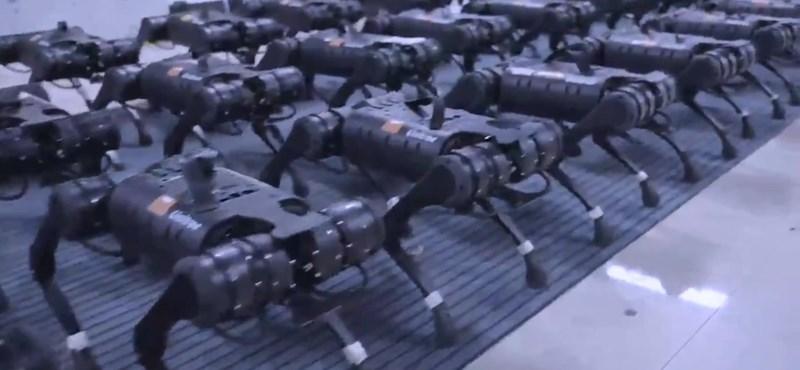 Es genial cómo se mueven simultáneamente decenas de perros robot chinos - video