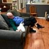 Nyolcmillió forintot szerzett egy nyugdíjas azzal, hogy macskák mellett aludt