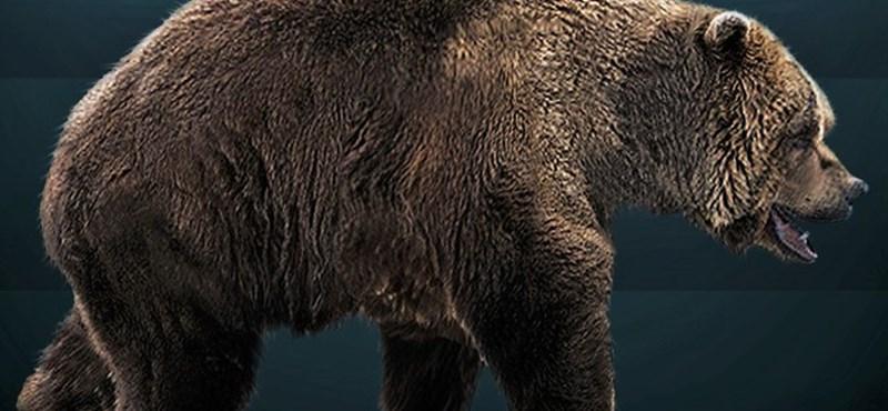 Még a szervei is megvannak annak a 39 ezer éves barlangi medvének, amit Szibériában találtak