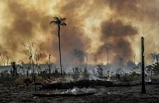 Megugrott a hőmérséklet az Amazonas-medencében, és ez mindent borít