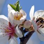 Kleopátra méhekkel szerzett magának örömöt az ágyban