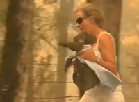 Blúzba csavarva mentették ki a lángok közül a síró koalát