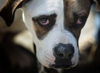 Miniszteri biztosa lett az állatvédelemnek Magyarországon