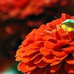Kipusztulhat a rovarok jelentős része, és ez katasztrófa lesz