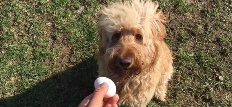 Próbált már tojást rakni a kutyája szájába?