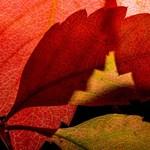 Barátságos, őszi idő jön, csípős hajnalokkal