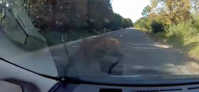 Centiken múlt az autós balesete egy szarvassal Csákvár közelében – videó