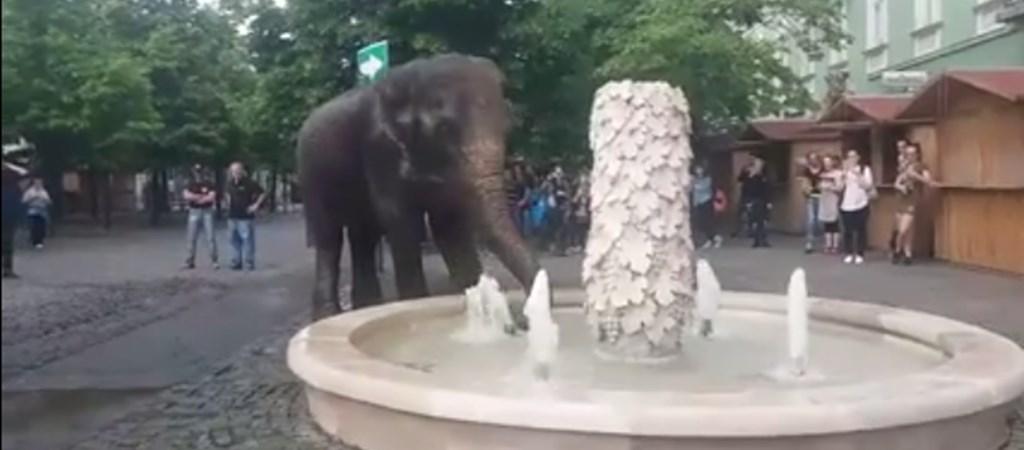 elefánt látvány
