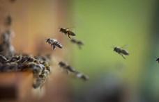 A rovarok 1-2 százaléka tűnhet el a Földről – évente