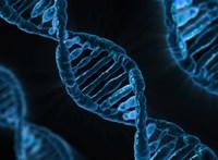 Génszerkesztéssel az anyaméhben gyógyítható lenne egy agyi rendellenesség