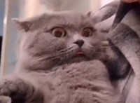 Ilyen döbbent macskákat ritkán látni