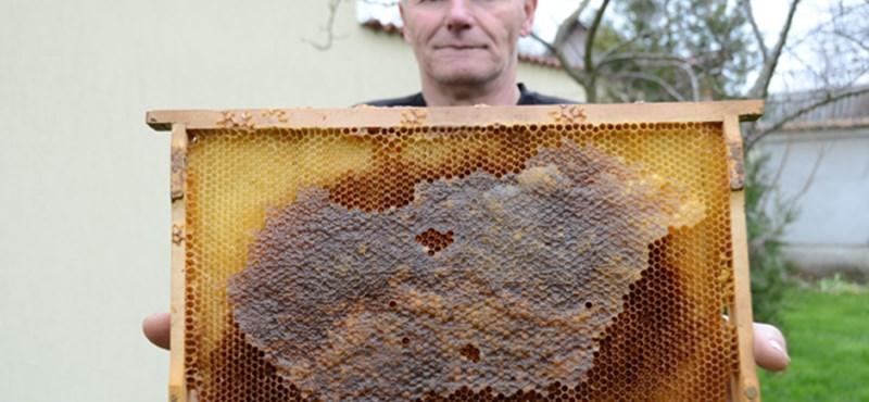Fotó a kiskunmajsai csodáról: Magyarország-térképet mézeltek a méhek