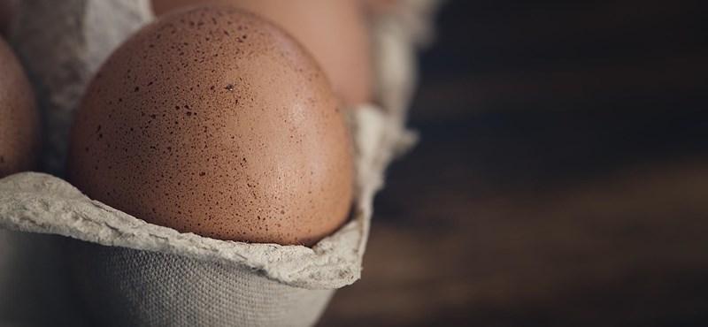 Megakadályozták a termelők, hogy megépüljön az ország legnagyobb tojótyúkfarmja