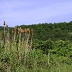 Újbuda: folytatják a gigantikus lakásprojektet a természetvédelmi terület tövében