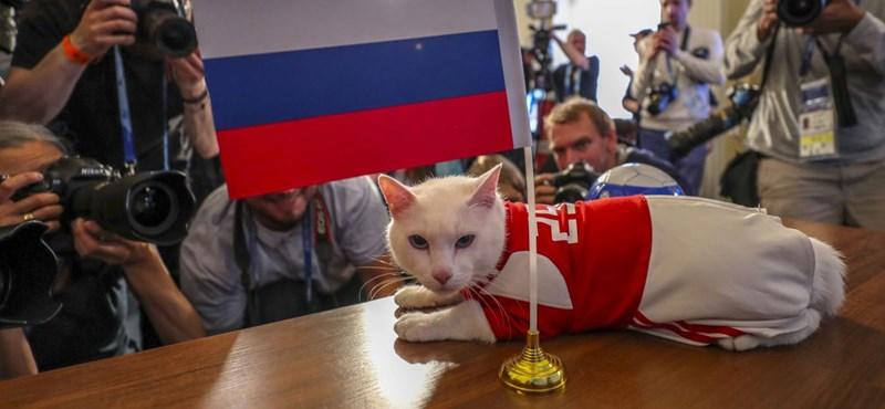 Jósolt Akhilleusz, a vébé süket macskája: a hazaiak fognak örülni?