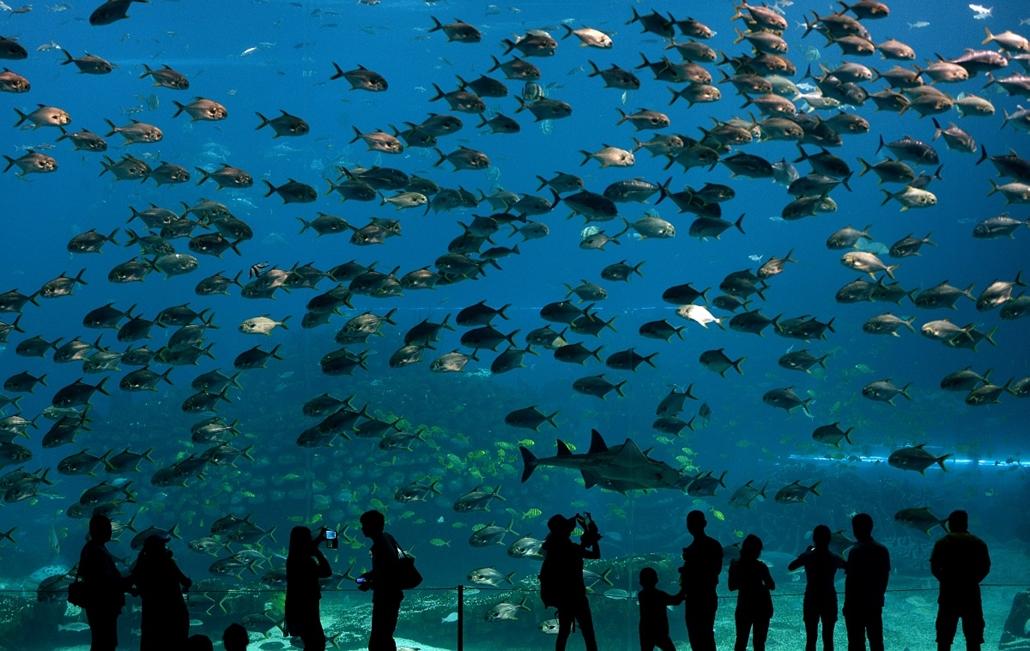 afp.14.04.29. - Zhuhai, Guangdong, Kína: látogatók a Chimelong Óceáni Királyság birodalmában. A világ legnagyobb tengeri szórakoztató parkjának kikiáltott létesítmény 2014. márciusában nyílt, építési költsége pedig csaknem 3,3 milliárd dollár volt. - 7kép