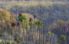 Annyira meleg novemberünk van, hogy nyílnak a tavaszi virágok