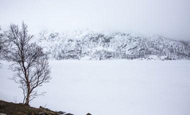 Mint egy látomás: fehér rénszarvasborjút fotóztak a behavazott Norvégiában