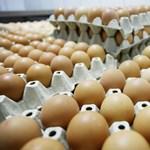 Durván megdrágul év végéig a tojás