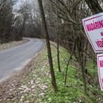 Több mint 50 ezer pulykát ölnek le Komárom-Esztergom megyében a madárinfluenza miatt