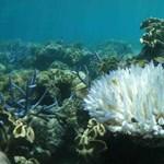 Rájöttek a tudósok, hogyan menthetnék meg a korallzátonyokat