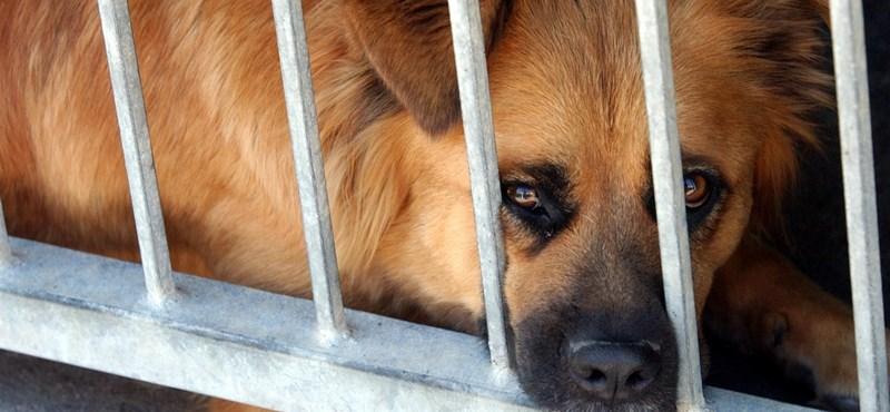 Sok a kidobott kutya, eboktatást javasol egy brit alapítvány