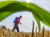 Három gyomirtóféle úgy felforgatja a talajt, hogy antibiotikum-rezisztencia lesz a vége