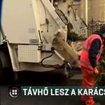 Budapesten elégetik, Pécsen a fatüzelésű erőműbe viszik a karácsonyfákat