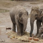 Elefánt végzett egy 8 éves kisfiúval Afrikában