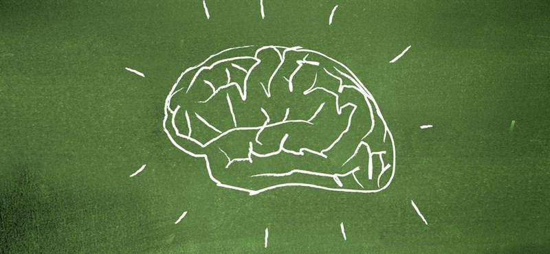Itt a bizonyíték: agyunk egy része felnőttkorban is fejlődik, van remény