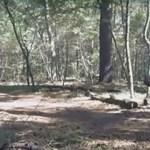Már ilyen magabiztosan sétál a Google emberszabású robotja – videó