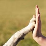 Átverték a házi kedvenc cicák és kutyák gazdáit