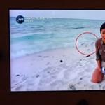 Élő adásban ragadta el egy sirály a védett teknősfiókát, kiakadtak a nézők