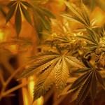 Most először találtak bizonyítékot arra, hogy ölhet a marihuána