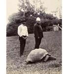 178 éves a világ legöregebb állata - fotó