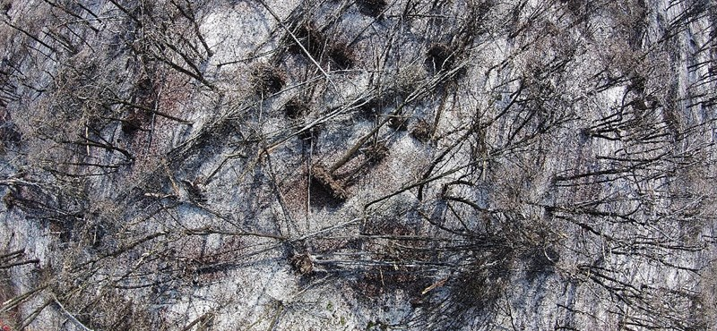 """Áder: """"drámai a szilánkosra tört, kifordult fák látványa"""""""