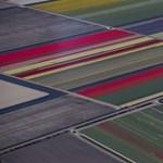 Megjött a tavasz igazi bizonyítéka Hollandiából – fotók