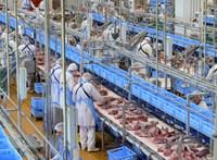 Nagyot nőhet a tej, tojás és a hús ára, akár 1800 forint is lehet egy kiló csirkemell