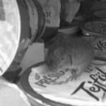 Egerek a Tescóban, Tesco az egerek ellen