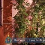 Csőtörés miatt nyitotta ki a lakást, marihuánát talált a lakatos