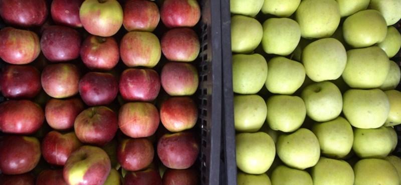 Gondban a Sió: nem lesz miből gyümölcslevet gyártani