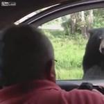 Két pásztort sebesített meg egy medve