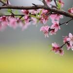 Szeles tavaszias időre lehet ma számítani