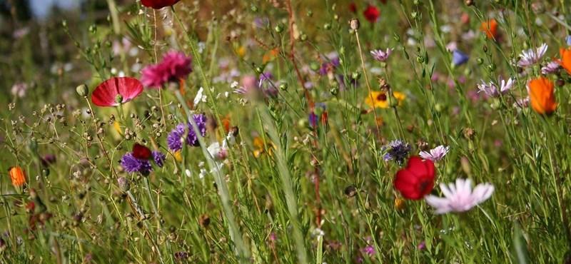 Kétperces teszt estére: mennyire ismeritek a kerti virágokat?