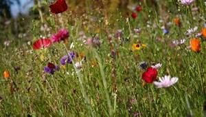 Képben vagytok az egyszikű és kétszikű növényekkel? - teszt estére