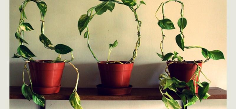 Ötletes lakáskiegészítő újrahasznosított virágokból