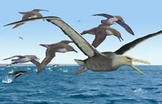 50 millió évesek az Antarktiszon talált madárcsontok