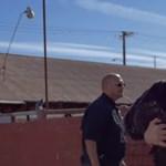 Joaquin Phoenix kicipelt egy borjút a vágóhídról